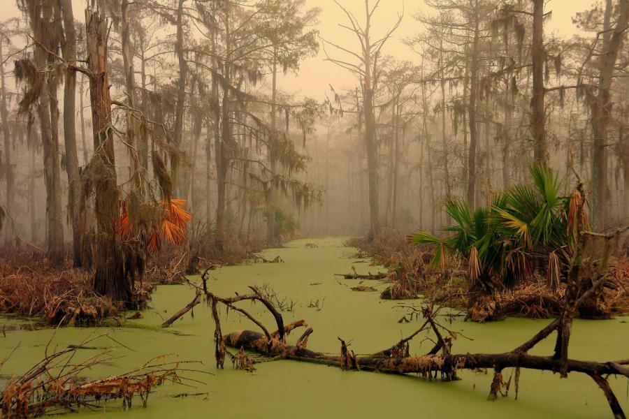 болото манчак
